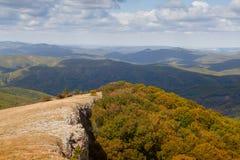 Лес осени красивый Стоковые Фотографии RF