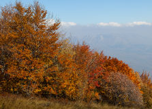 Лес осени красивый Стоковые Изображения RF