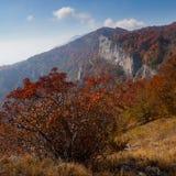Лес осени красивый Стоковое Изображение