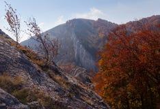 Лес осени красивый Стоковое Изображение RF