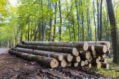 Лес осени красочный с чудесной солнечностью Стоковое фото RF