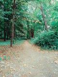 Лес осени линяет зеленую листву стоковые фотографии rf