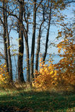 Лес осени на реке Волге - России - на ясный солнечный день Стоковое Изображение