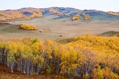 Лес осени на степи Стоковое Изображение