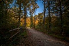 Лес осени - обрабатываемые цвета стоковые фотографии rf