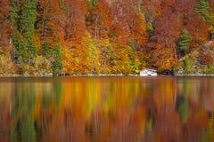 Лес осени отраженный в озере Alpsee Стоковая Фотография RF