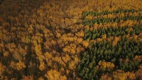 Лес осени перед дождем сток-видео