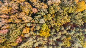 Лес осени с зеленым цветом и желтым цветом выходит, воздушный взгляд трутня стоковая фотография rf