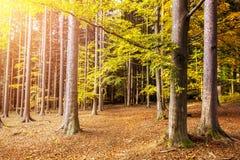 Лес осени с красочными листьями стоковое изображение rf