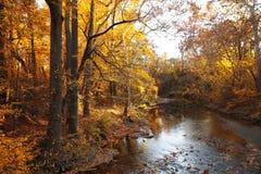 Лес осени с рекой стоковые фотографии rf