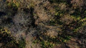 Лес осени увиденный сверху видеоматериал