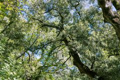 Лес осени Стоковые Фотографии RF