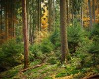 Лес осени Стоковое Изображение