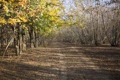 Лес осени Стоковая Фотография RF