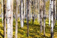 Лес осени Стоковые Изображения