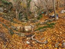 Лес осени Стоковые Изображения RF