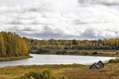 Лес осени Стоковые Фото