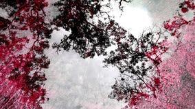 Лес отражения предпосылки от воды на поле Стоковое Изображение RF