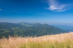 Лес от взгляда sawanna Стоковые Изображения RF