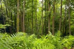 Лес ольшаника стоковые фото
