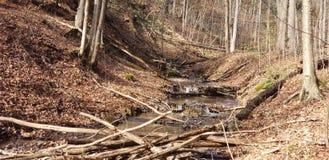Лес падения стоковые изображения rf