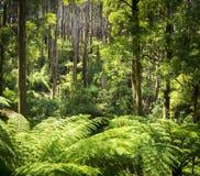 Лес папоротника Стоковые Изображения RF
