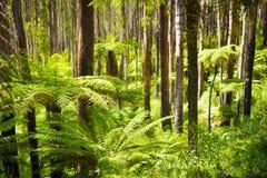 Лес папоротника Стоковые Фотографии RF