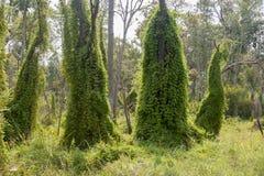 Лес папоротника Стоковые Изображения