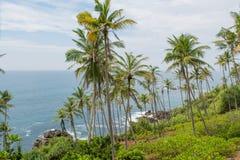 Лес пальм на красивом пляже около океана Стоковые Изображения RF