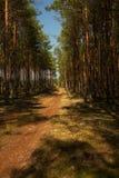 Лес, песочная дорога в лете Стоковые Изображения RF