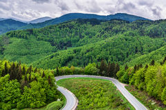 Лес петляющей дороги весной Стоковое Изображение