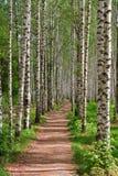 Лес пешеходной дорожки Стоковое Фото