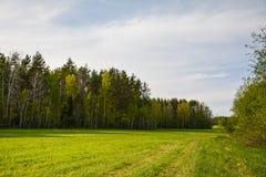 Лес поднимает за зеленым полем стоковая фотография rf