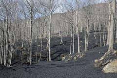 Лес покрытый с вулканическим камнем Стоковое Изображение