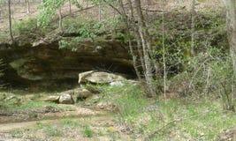 Лес положения Zaleski стоковые изображения rf