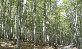 Лес после дождя весной лес после того как дождь весной был искупан и чист стоковая фотография rf