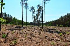 Лес после валить Стоковое Изображение