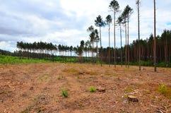 Лес после валить Стоковая Фотография RF