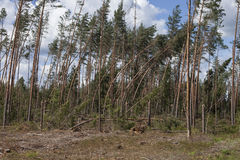 Лес после шторма стоковое фото