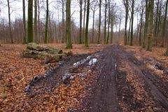 Лес получает готовым на весна Стоковое фото RF