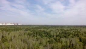 Ландшафт лесных деревьев весны Лес предпосылки леса природы весны Aero r 4K видеоматериал