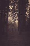 Лес преследующего Стоковые Изображения RF