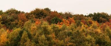 Лес предпосылки в цветах осени стоковые фотографии rf