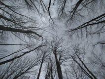 Лес, предыдущая весна, конусы ели Стоковые Фотографии RF