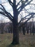 Лес, предыдущая весна Стоковая Фотография RF