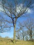Лес, предыдущая весна Стоковые Изображения RF