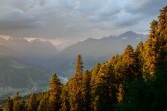 Лес прикарпатских гор Стоковые Изображения