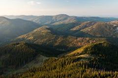Лес прикарпатских гор Стоковые Фото