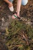 Лес природы туризма подготовки костра conc Стоковое Изображение RF