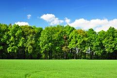 Лес природы стоковая фотография
